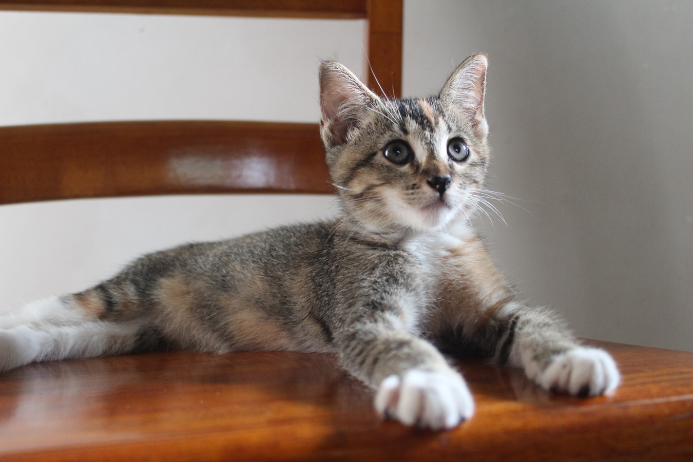 A baby kitten sitting on a chair. New reports are showing that seniors can benefit from pets.