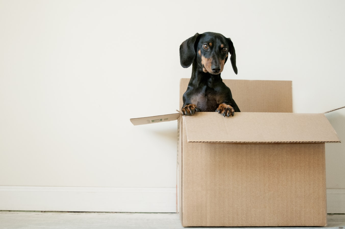 A dog in a moving box. Many seniors need help when moving into senior living