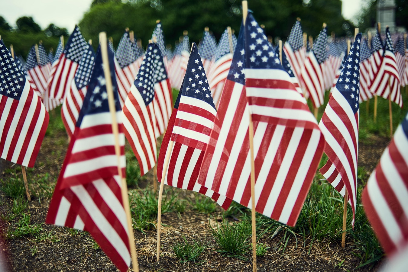 Mini american flags sticking in the ground.