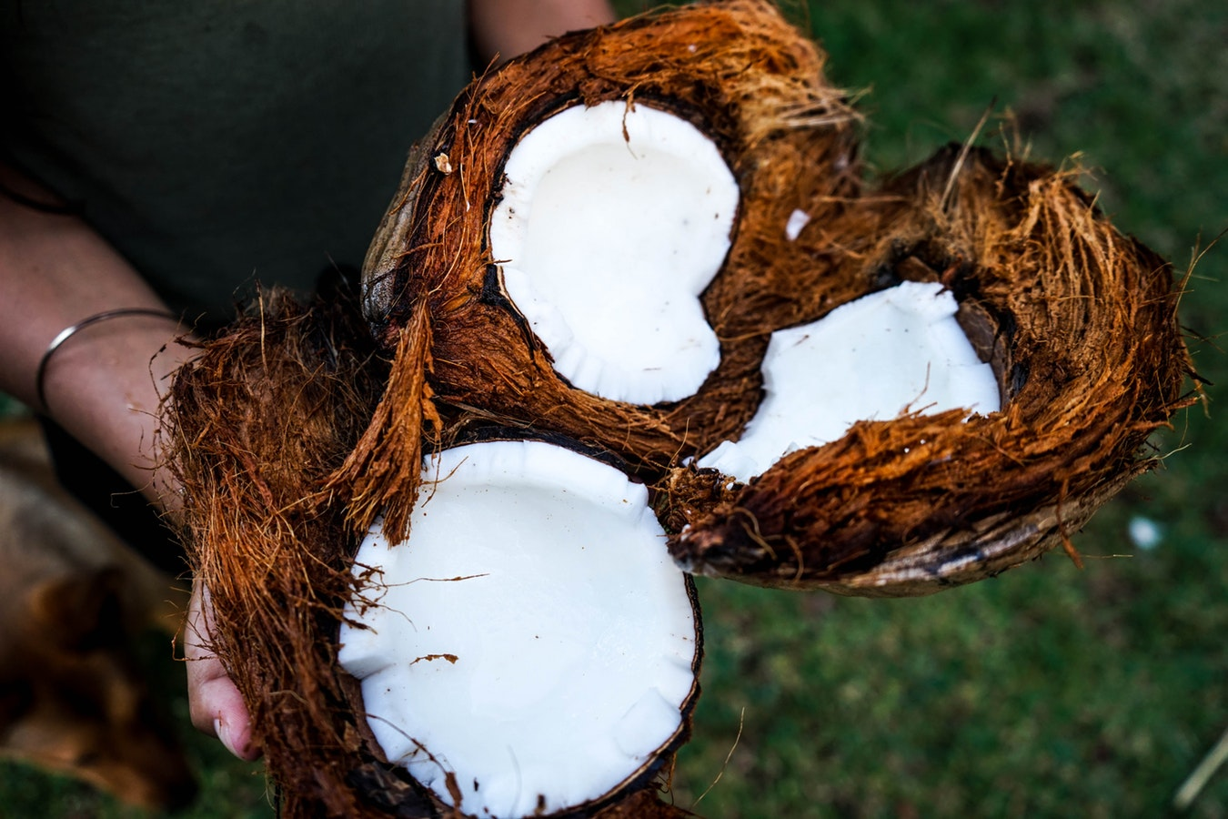An individual holding coconuts. Coconut oil is said to be beneficial for Alzheimer's patients