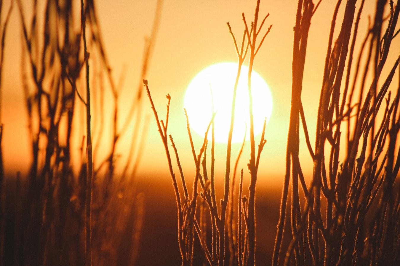The sun peeking through plants.