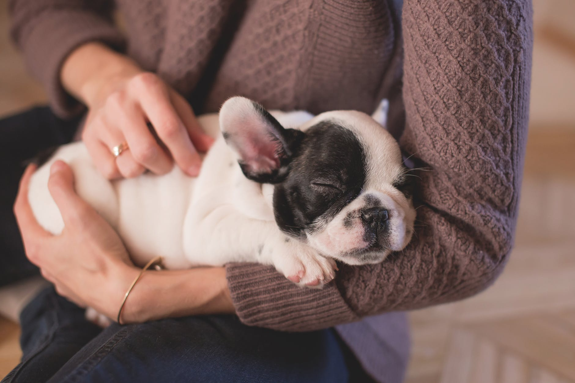 A puppy being cuddled and pet. A good way to help avoid feelings of isolation is with the addition of a pet.