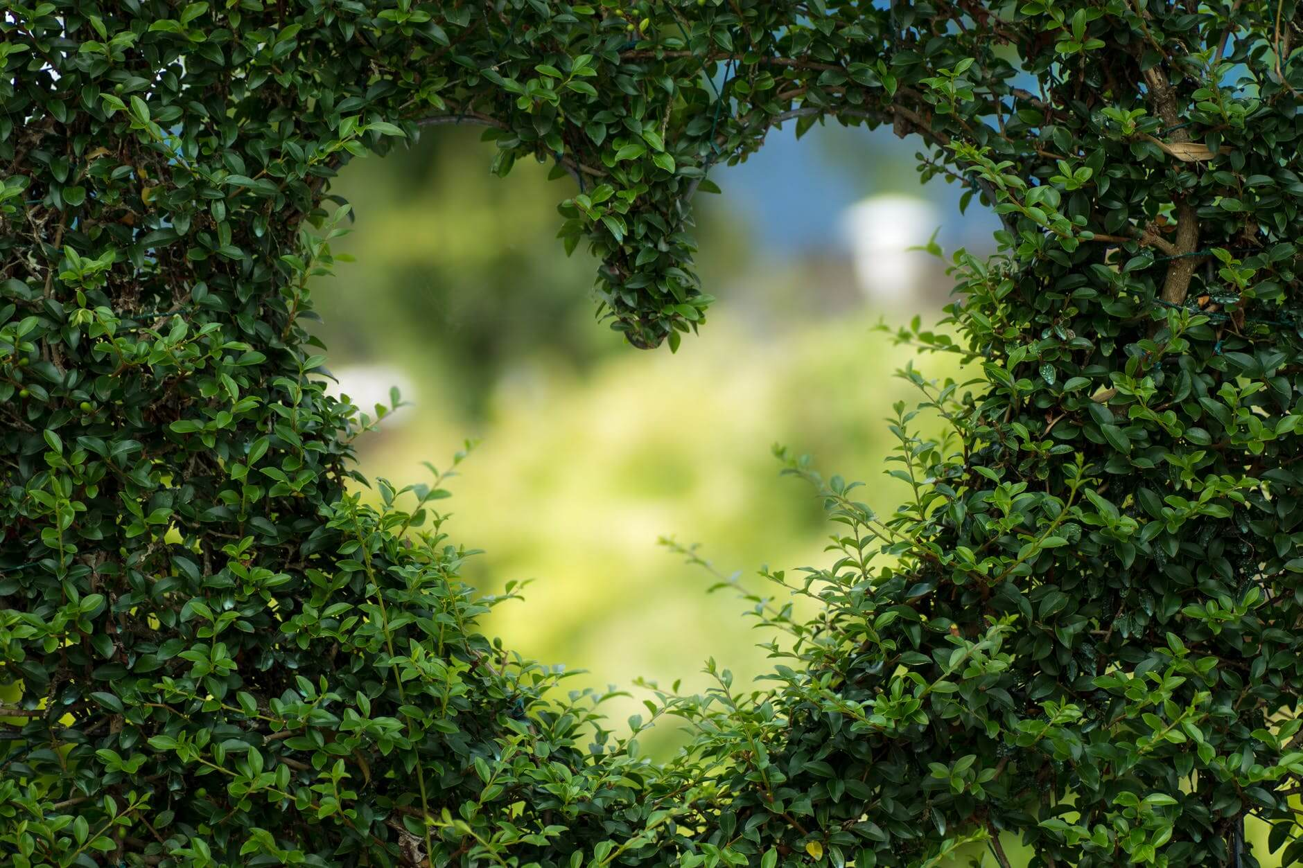 A heart cut out of a green shrubbery. Pets for seniors provide love and comfort.