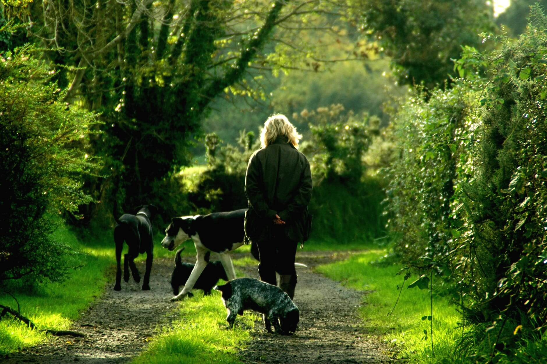 An older woman out on a walk with her dogs. The benefits of pets for seniors are great.