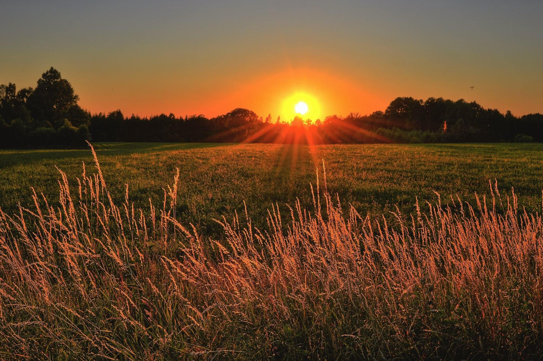 The sun going down over a wheat field. Some individuals who have alzheimers may suffer from sundowning.