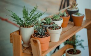 A group of plants on a wooden shelf